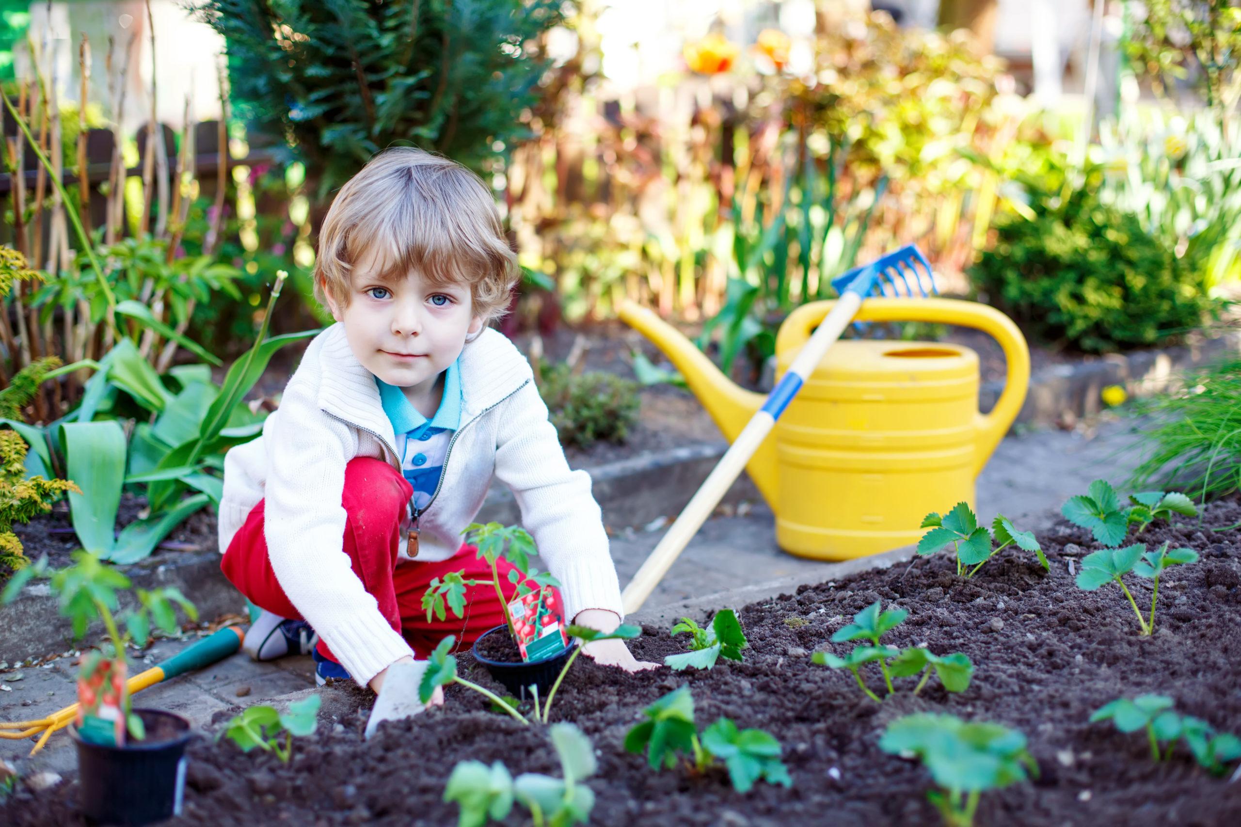 Lovely,preschool,blond,kid,boy,planting,seeds,and,seedlings,of